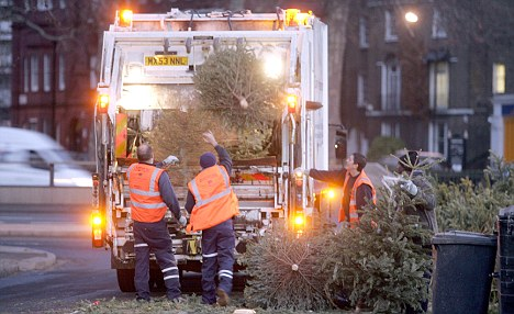 Disposed of: Binmen are forced to load their truck with unwanted trees, leaving less space for the usual domestic waste