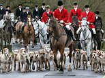 Stuart Radbourne, huntsman and joint-master with the Avon Vale Hunt, leads the riders and hounds for their traditional Boxing Day hunt, on December 26, 2012 in Lacock, England. As hundreds of hunts met today, Environment Secretary Owen Paterson claimed that moves to repeal the ban on hunting with dogs in England and Wales may not happen in 2013, although he insisted it was still the government's intention to give MPs a free vote on lifting the ban.  (Photo by Matt Cardy/Getty Images)