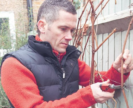 Warning: Ignore climbing plants at your peril, says Martyn Cox