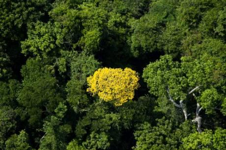 Grønt. Den brasilianske regnskov i Amazonas er afgørende for klodens CO2-niveua. - Foto: Greenpeace