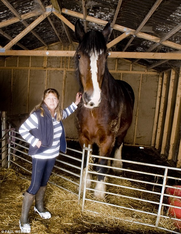 Around 100 animals, including 49 horses, currently live in the Horse Refuge, which has moved to several locations in the past decade