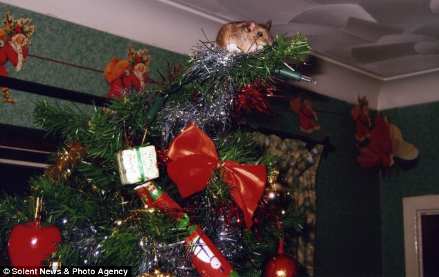 mouse in tree