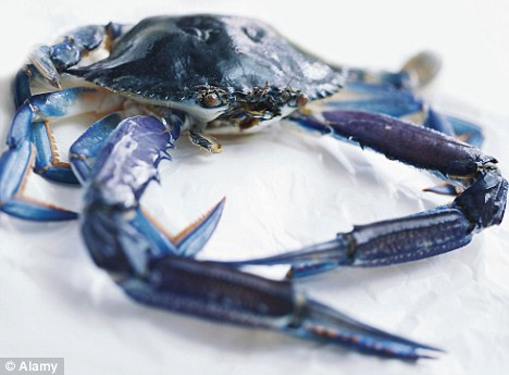 Snapped up: Blue crabs are another item in high demand in North Korea, according to defectors