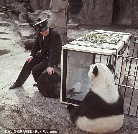 Chi-Chi, who became a national heroine, arrives at London Zoo in 1958