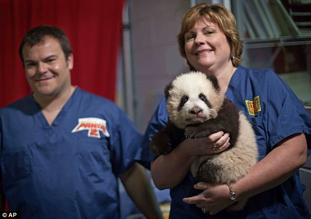 Say cheese: Dr Murphy, director of veterinary services, holds the only giant panda born at a U.S. zoo last year