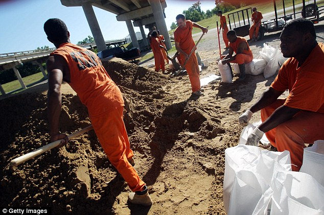 Working: Inmates from St. Landry Parish Jail fill sandbags to be used to combat the rising Atchafalaya River in Krotz Springs, Louisiana