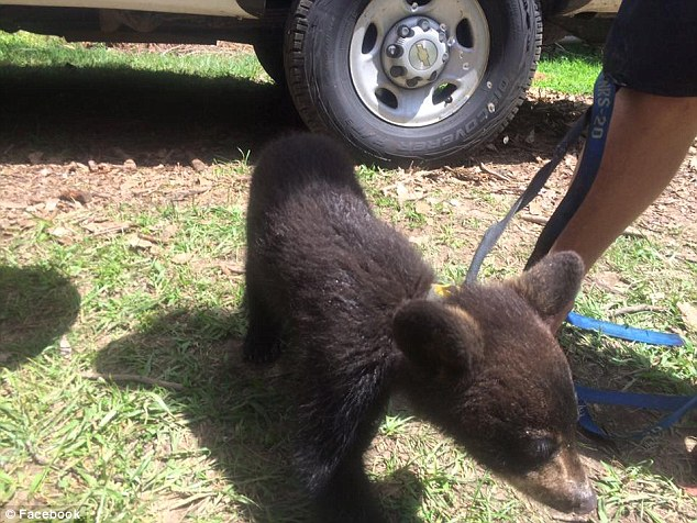 Allen took Noli Bear to Matt Moses, who owns USA Raft Company and together they contacted Tennessee Wildlife Resources