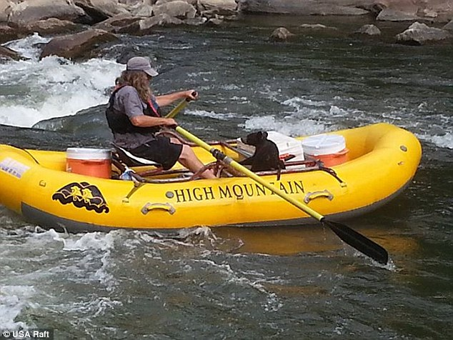 Noli bear was picked up by river guide Danny Allen (pictured), of High Mountain Expeditions, on the side of the Nolichucky River near Erwin, Tennessee, on Thursday
