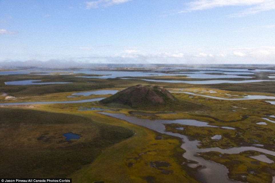 The craters are thought to have originally been pingos - an accumulation of ice under a mound of earth that have erupted as gas has been released by the melting ice. The image above shows a pingo near Tuktoyaktuk in north west Canada