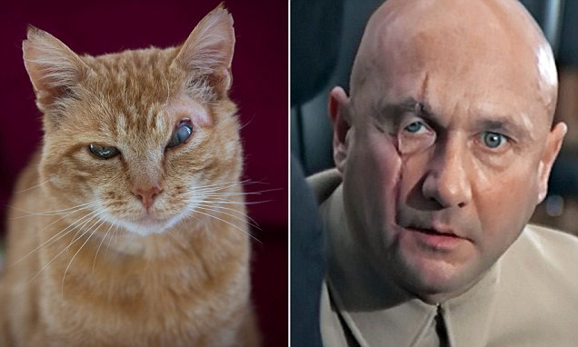 Abandoned cat Nelson looks like Bond villain Blofeld but can't find a home