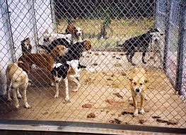 Or, will those who are viewed as burden to society suffer the same fate as a unwanted dog in a humane shelter?