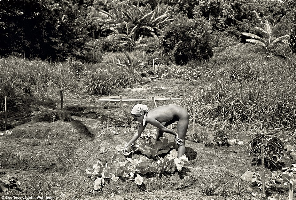 Inspecting the crop: A naked women wearing only a headscarf inspects some lettuce in the community's garden