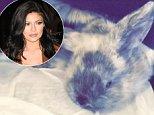 kylie jenner rabbit