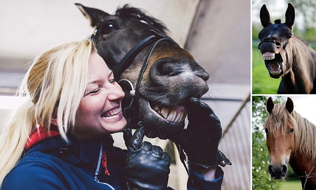 Horses share facial expressions with humans and more animated than chimps and dogs