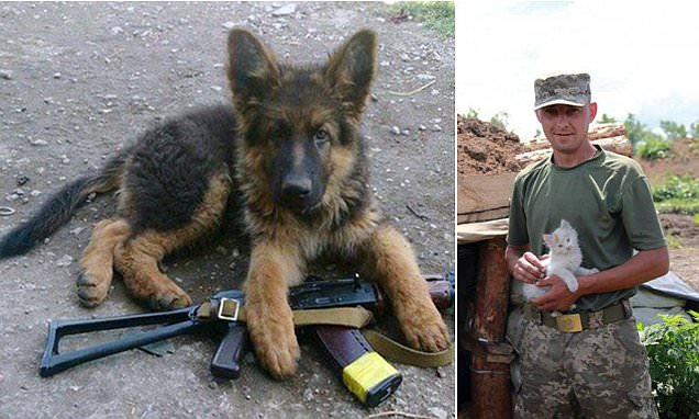 Ukrainian soldiers post photographs of their pets on front line online