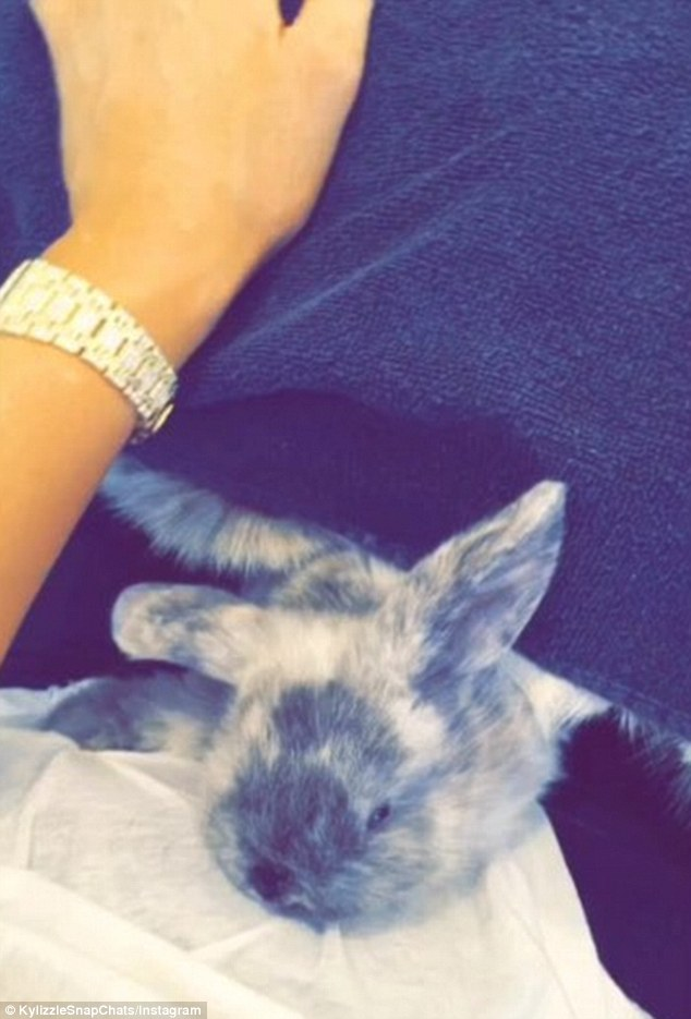 Too cute: Kylie also shared a clip of the rabbit reclining on her lap