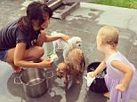 """hilariabaldwinDama (who Carmen has renamed as """"Cooper"""") joined in on spa day...Carmen probably washed the patio and her dress (and me) as much as the dogs"""