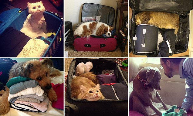 Photos of miserable pets watching their owners pack for holiday