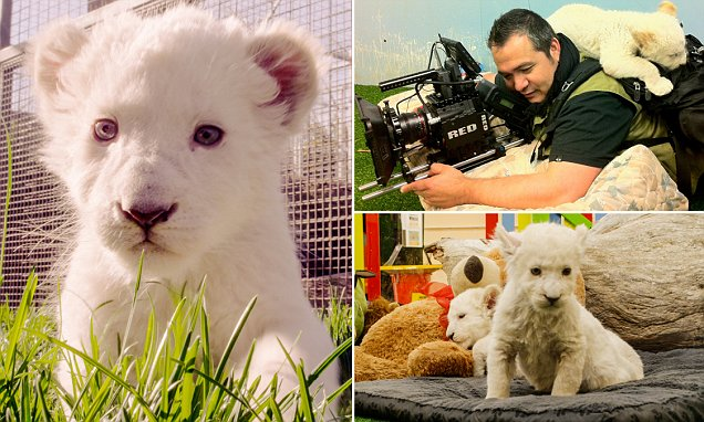 Photos capture the first few years of the lives of two white lion cubs