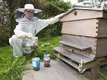 Copyright  PICTURE BY DALE CHERRY 11/08/15   ..for Financial section.. pic shows  Harrison Walne with his wasp traps and his bee hive which is under attack by wasps.
