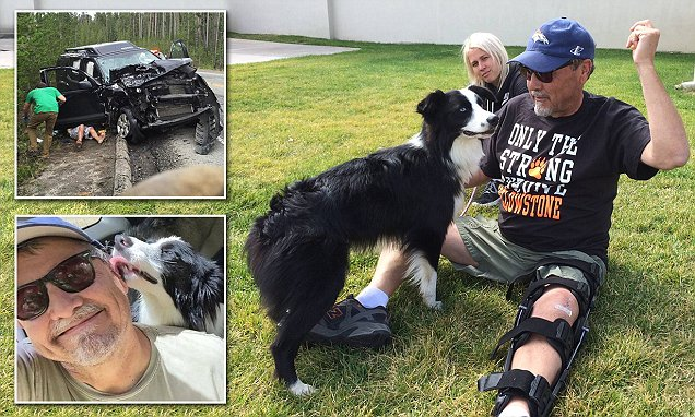 Dog lost in Yellowstone National Park after car accident reunited with family 42 days