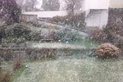 A photo shared on Twitter with the caption 'Spring in Dunedin!' Photo / @ferunk