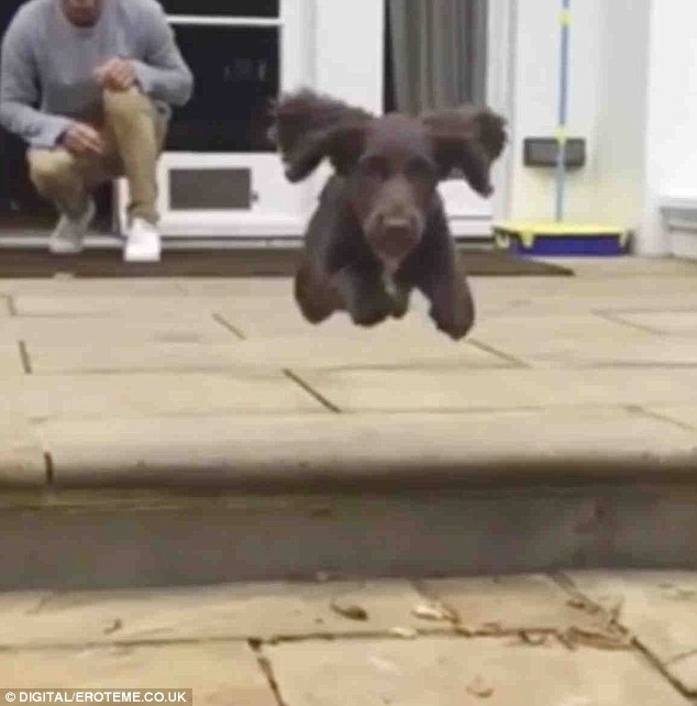 Flying: 'Watch baby Olive fly!! How cute are her ears?!?! X vb ❤️,' Victoria captioned the slow-motion video