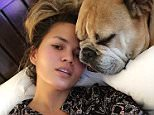 chrissyteigenMovies in bed with my puddy buddy. And before a dog in bed gets you all riled up, just know that we stink equally.