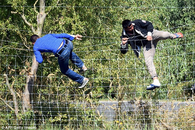 Two migrant men climb over a fence at the Hungarian-Serbian border in a bid to reach western Europe