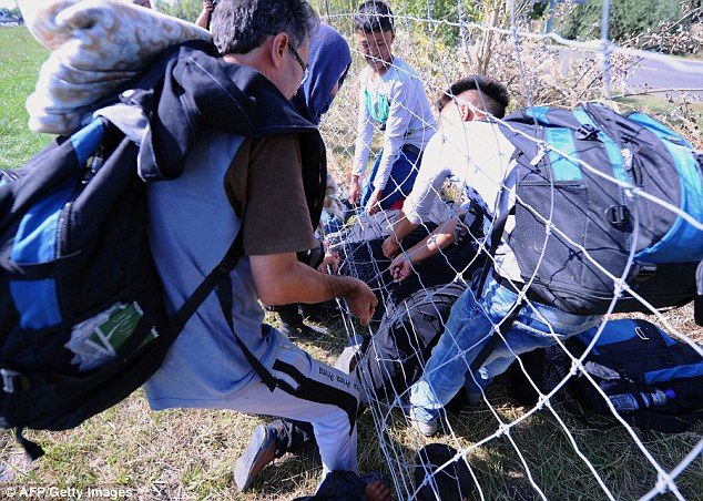 Migrants pass under a fence after they broke through a police line near Roszke at the Hungarian-Serbian border