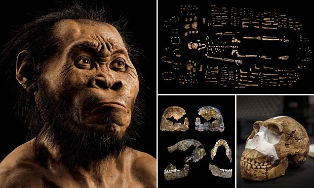 Homo naledi, a new species of human discovered in South African cave