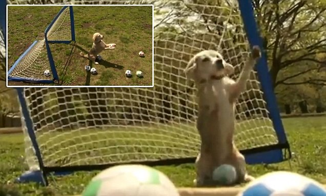 Purin the dog breaks world record for catching the most goals in one minute