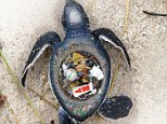 ** Please contact Christian Waters at waters@h20designsbeijing.com - he would like to add some details to our story** In an attempt to increase awareness for the plight of marine animals, WWF has launched a campaign entitled ?The Price of Convenience? in collaboration with photographer Christian Waters, to show people exactly what happens to their trash when they?re done with it.  In an interview with Refinery29, Waters explained why he was so compelled to draw attention to this problem: ?People are basically using the oceans as their trash cans. I thought, maybe I can make a difference and try to create something that will help people change their lives and change how they act towards the creatures in the sea.?  On a recent snorkeling expedition to Malaysia, Waters and his girlfriend were admiring the pristine blue sky and crystal-clear sea, when they began to notice pieces of trash floating around in the water. In addition to this distressing sight, Waters had also recently watched