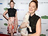 LOS ANGELES, CA - SEPTEMBER 11:  Actress Judy Greer attends the MTAC 2015 Art Festival at The Autry National Center on September 11, 2015 in Los Angeles, California.  (Photo by Michael Kovac/Getty Images for More Than A Cone)