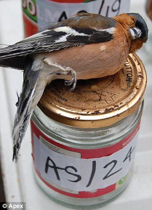 One of the wild birds that were found in a freezer belonging to Christopher Searle