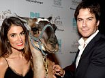 BEVERLY HILLS, CA - SEPTEMBER 18:  Actress Nikki Reed and actor Ian Somerhalder attend Heifer Internationals 4th Annual Beyond Hunger Gala at the Montage on September 18, 2015 in Beverly Hills, California. Heifer International works to end hunger and poverty while caring for the Earth. .  (Photo by Chris Weeks/Getty Images for Heifer International)