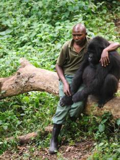 Man gives gorilla a hug after his mum is killed by poachers