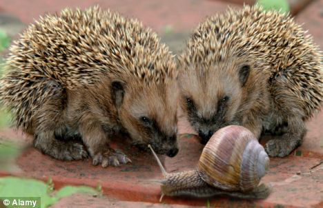 A prickly inssue: Some say humans are obsessed by sex... but so are animals, says zoologist Dr George McGavin