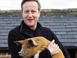 Prime Minister David Cameron holds a Oxford Sandy Black Pig.