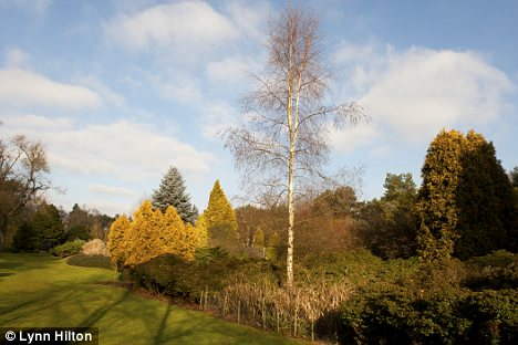 Closer to home: The Savill Garden, and Valley Gardens in Windsor's Great Park has 60 varieties of birch trees