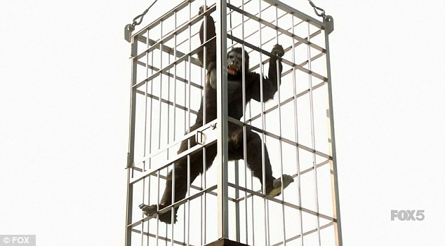 Grand entrance: A gorilla in a cage was lowered into the concert