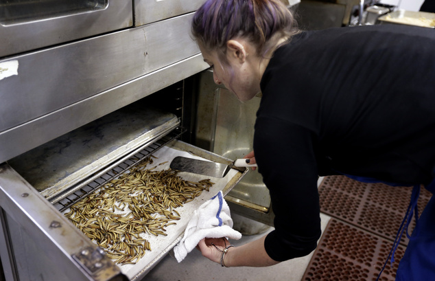 """Genevieve Gladson Rainville turns over meal worms as they bake in an oven Wednesday, Feb. 18, 2015, in San Francisco. A growing number of """"entopreneurs"""" are ..."""