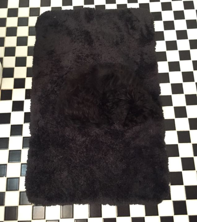 Man bewildered to discover his pooch camouflaged by his bathroom rug