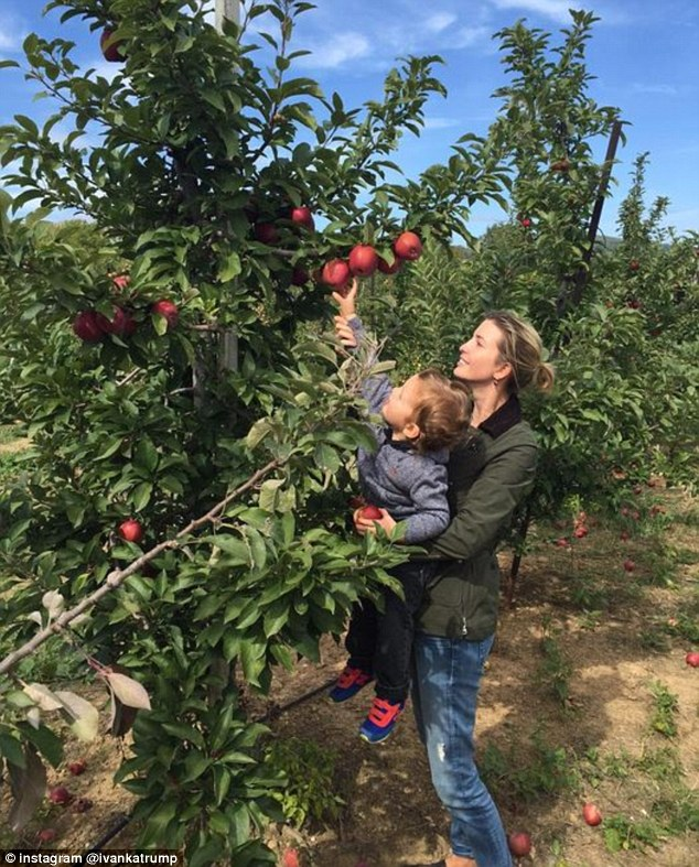 Helping hand: Ivanka Trump, 33, can be seen lifting her 23-month-old son Joseph at an apple orchard on Sunday. Her daughter Arabella, four, and her husband Jared Kushner were also at the family event