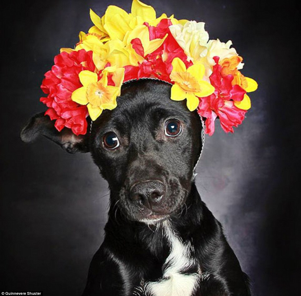Adorable: She then fixed a flowery crown or necklace to each of the canines, before photographing them against a dark backdrop to 'highlight their eyes'. Above, six-month-old Rafiki (adopted) gazes at the camera with wide eyes while donning a red-and-yellow crown