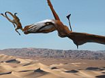 This illustration provided by Brigham Young University on Oct. 16, 2015 depicts a pterosaur, which would have been the largest flying reptile of the time 210 million years ago, based on fossils found in 2009 at a site in Dinosaur National Monument near the town of Jensen in northeastern Utah. Its wingspan is about 1.3 meters (4.3 feet). The sphenosuchian depicted in its jaws is about 25 centimeters (10 inches) Paleontologists have discovered a cliff brimming with fossils that offers a rare glimpse of desert life in western North America early in the age of dinosaurs. (Josh Cotton/Brigham Young University via AP)