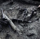 Dogs and a sex toy found in ancient tomb