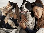 \nAriana Grande and her Rescue Dogs, watermark must be visible