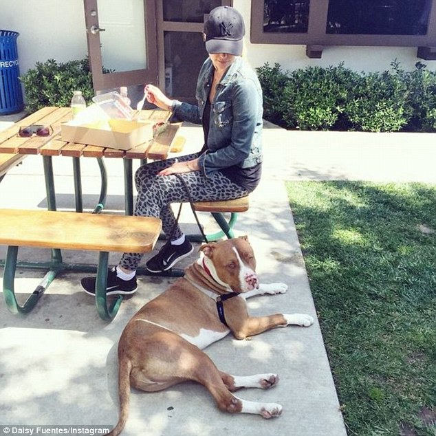 Temporary home: TheLatin beauty volunteered to serve as a foster mom to the pup and currently it is living with Daisy as she 'covers all the costs to get him ready for adoption'