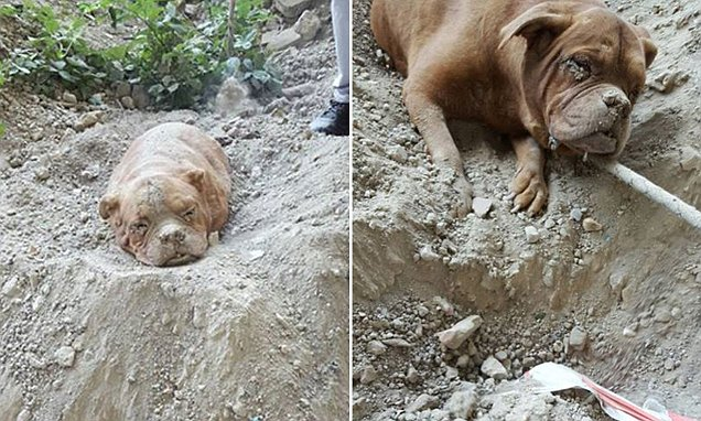 French dog owner who buried pet alive is arrested after outrage